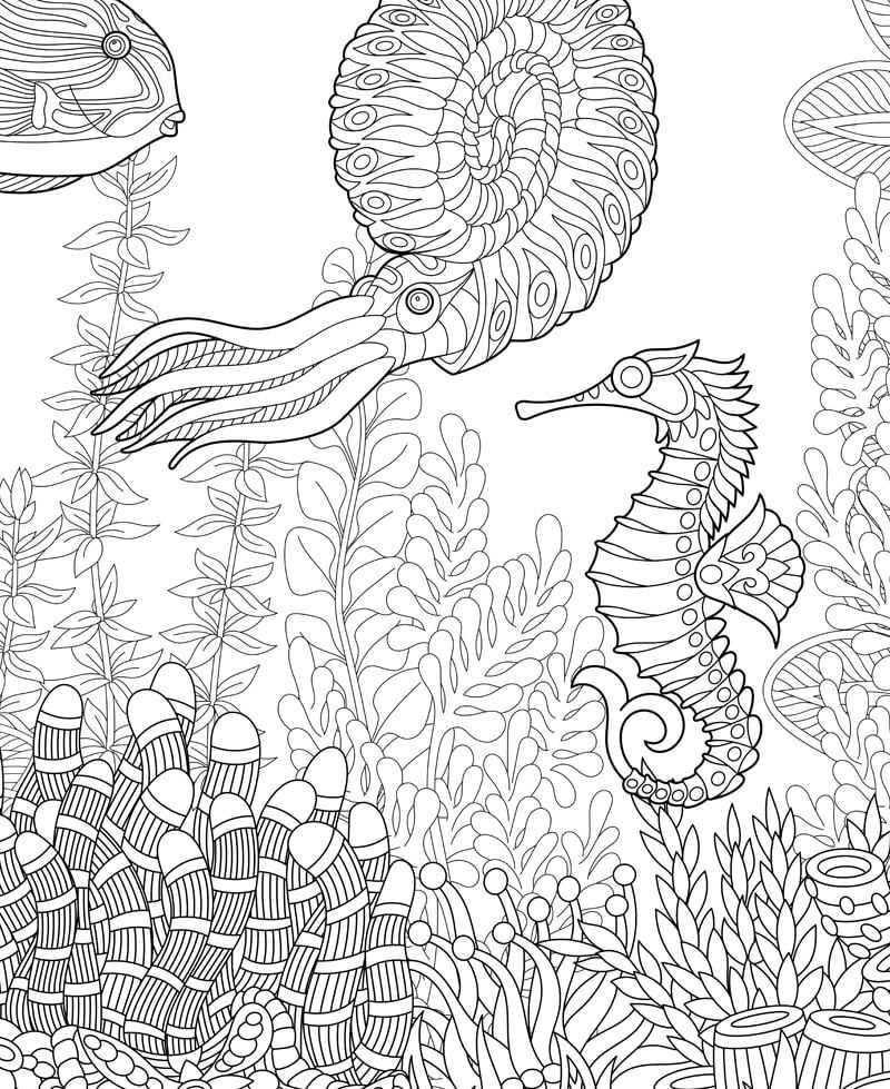 Poster à colorier Zen Sea