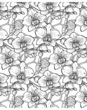 Coloriage - Orchidées